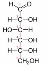 フィッシャー投影式で単糖の構造式の暗記量を激減!! | 化学受験テクニック塾