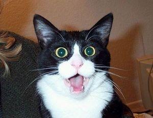 猫が驚いた