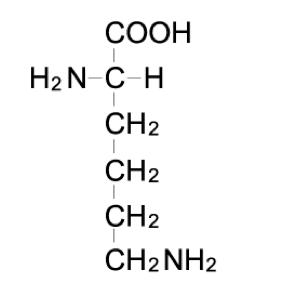 リシン 分子量