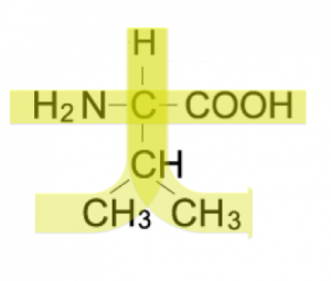 バリン 分子量