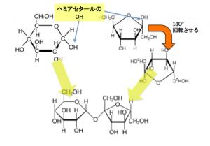 スクロース,グリコシド結合,開環
