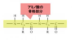 α-アミノ酸,ペプチド結合,タンパク質