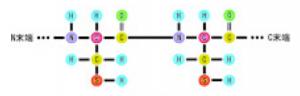 タンパク質,ニンヒドリン反応