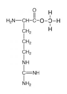 アミノ酸,エステル化