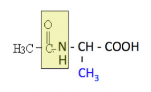 アミノ酸,アミド結合