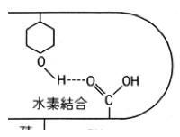 タンパク質,3次構造,水素結合