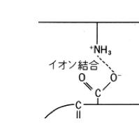 タンパク質,イオン結合