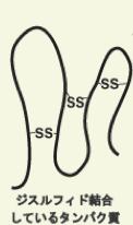 タンパク質,3次構造,ジスルフィド結合