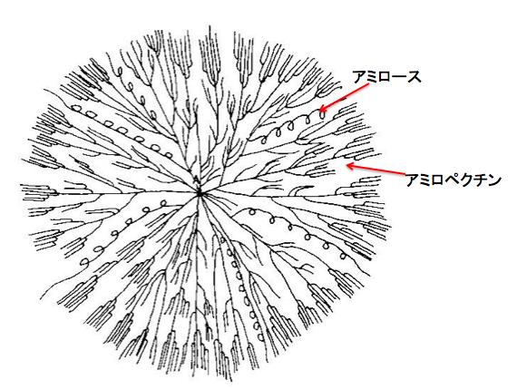 デンプンのアミロースとアミロペクチンの違いとは? | 化学受験テクニック塾